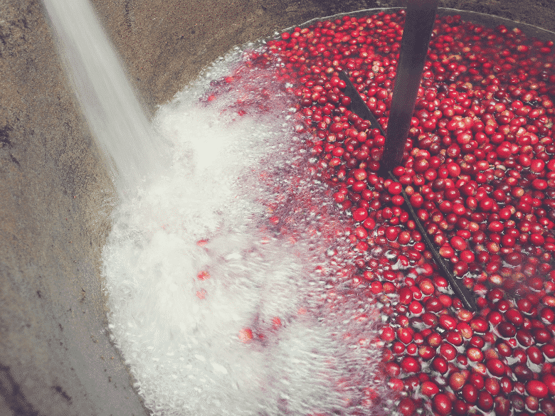 machine wet processing coffee cherries with water gushing in from the top