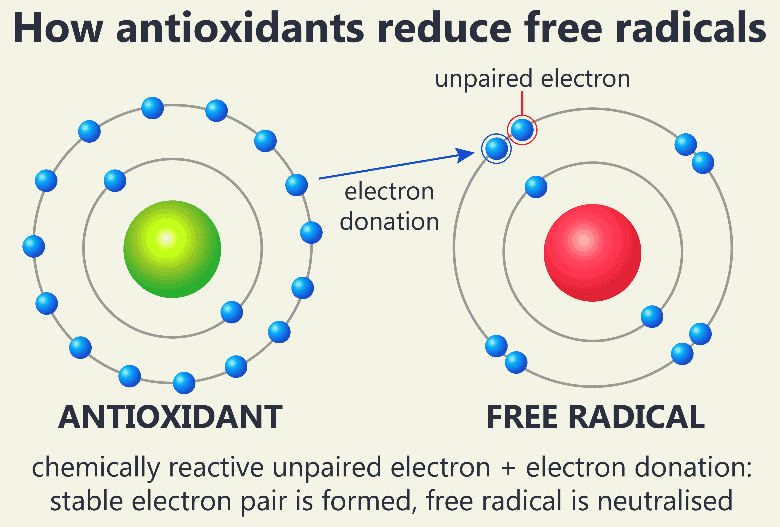electrons from antioxidant reacting to reduce free radicals, is decaf coffee good or bad