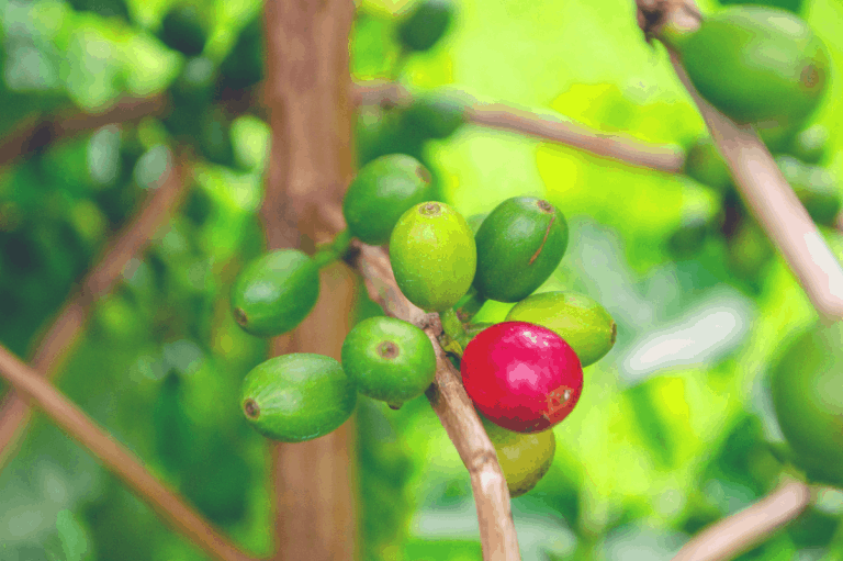 8 Best Kona Coffee Beans You Need to Try