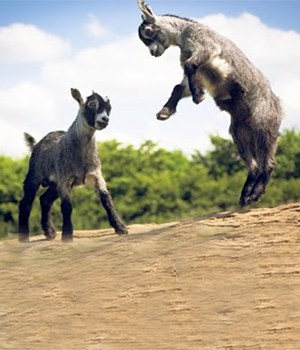 1 An Ethiopian Tale The Dancing Goats, history of coffee