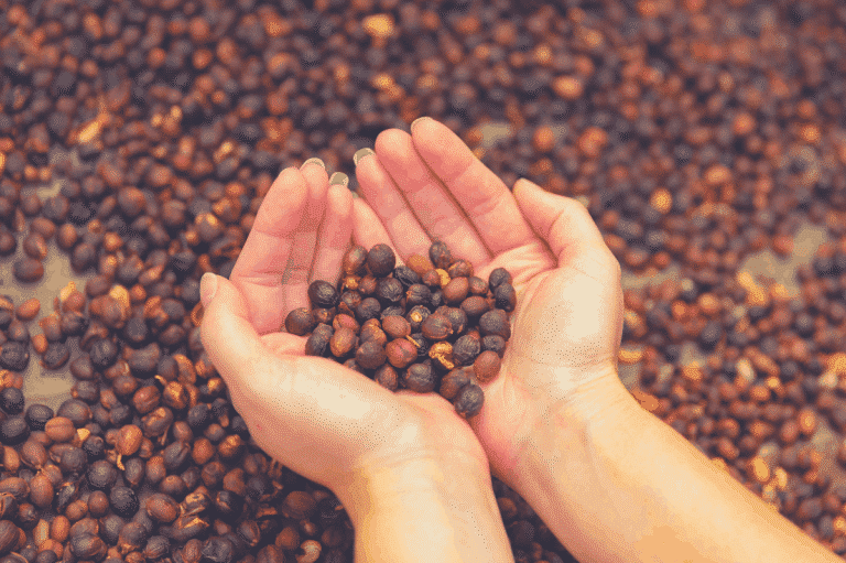 The Top 8 Best Organic Coffee: Authentic Review