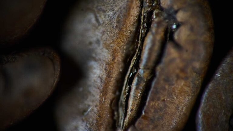 3 Reasons Why Oily Coffee Beans Are Bad For Grinders (And Easy Solutions)