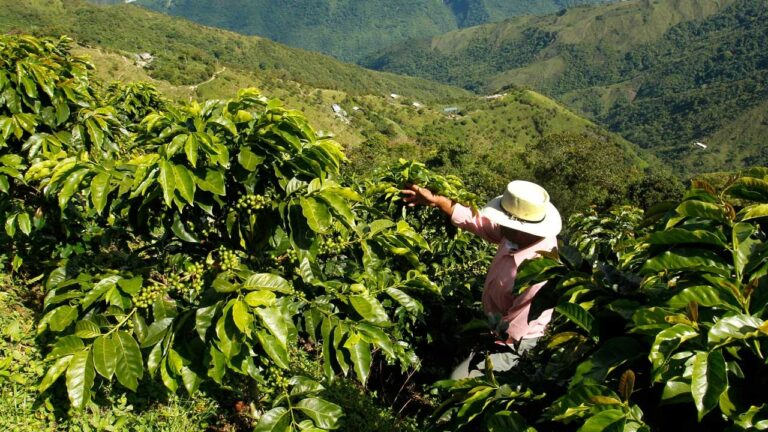 Colombian Coffee vs Arabica: Which Is Better?